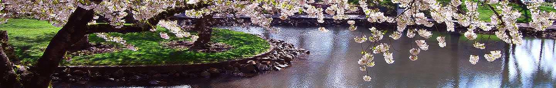 Jardim com lago e arvore em flor plantada numa ilha redonda
